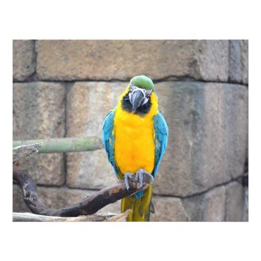 macaw azul del oro en loro de la vista delantera d tarjetas informativas