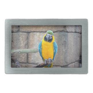macaw azul del oro en loro de la vista delantera d hebilla de cinturon