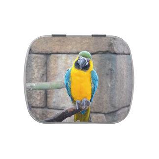 macaw azul del oro en loro de la vista delantera d latas de dulces