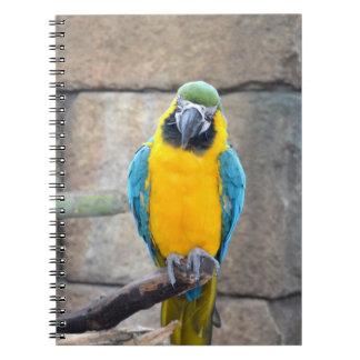 macaw azul del oro en loro de la vista delantera d libros de apuntes con espiral