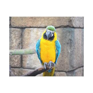 macaw azul del oro en loro de la vista delantera d impresiones en lona