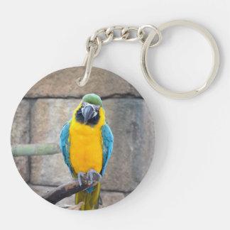 macaw azul del oro en loro de la vista delantera d llavero