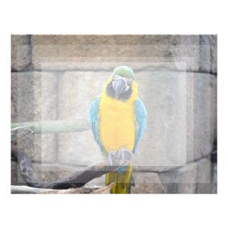 macaw azul del oro en loro de la vista delantera d plantilla de membrete