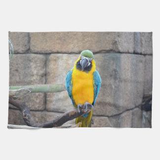 macaw azul del oro en loro de la vista delantera d toalla de mano