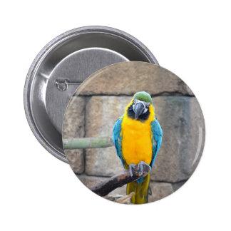 macaw azul del oro en loro de la vista delantera d pins