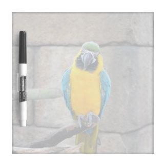 macaw azul del oro en loro de la vista delantera d pizarras blancas de calidad
