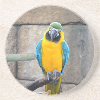 macaw azul del oro en loro de la vista delantera d posavaso para bebida