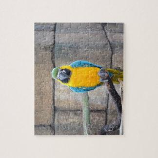 macaw azul del oro en loro de la vista delantera d puzzles