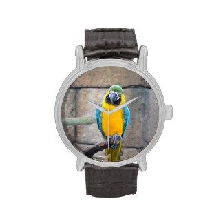 macaw azul del oro en loro de la vista delantera d reloj de mano