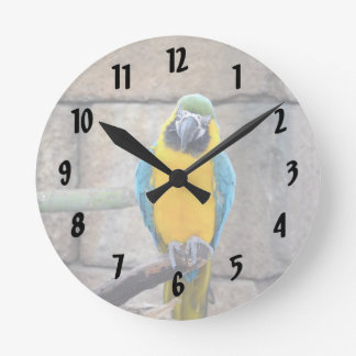 macaw azul del oro en loro de la vista delantera d reloj de pared