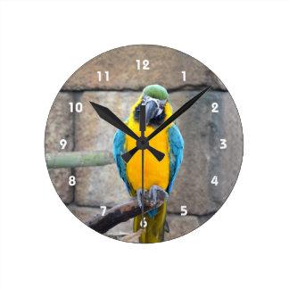 macaw azul del oro en loro de la vista delantera d reloj redondo mediano