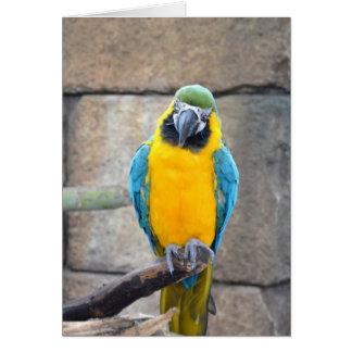 macaw azul del oro en loro de la vista delantera d tarjeta
