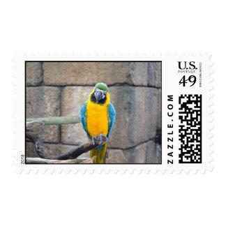 macaw azul del oro en loro de la vista delantera sello