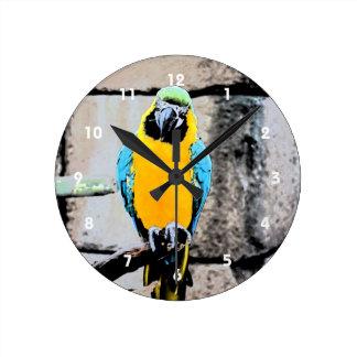 macaw azul del oro en loro del paintery de la perc reloj redondo mediano