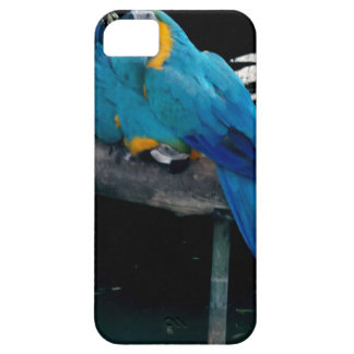 Macaw azul iPhone 5 protectores