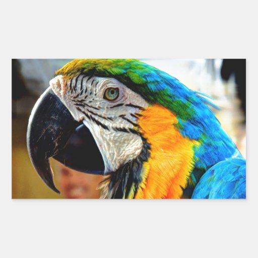 Macaw azul pegatina rectangular
