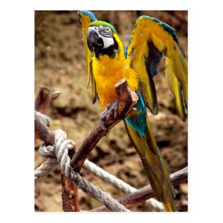 Macaw azul y amarillo postales