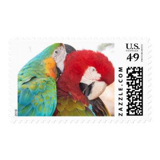 Macaw Azul-y-Amarillo y Macaw de Scarlett Estampillas