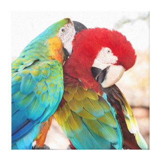 Macaw Azul-y-Amarillo y Macaw de Scarlett Impresión De Lienzo