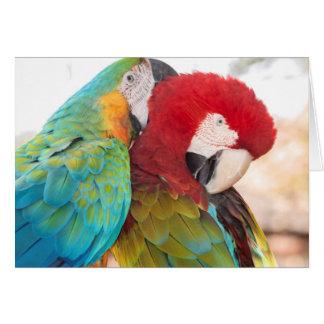 Macaw Azul-y-Amarillo y Macaw de Scarlett Tarjeta De Felicitación