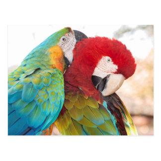 Macaw Azul-y-Amarillo y Macaw de Scarlett Tarjeta Postal