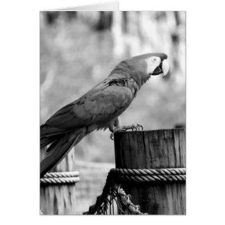 macaw bird bw animal image card