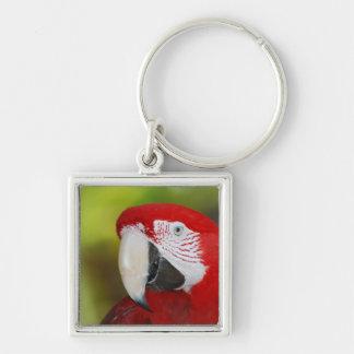 Macaw bonito del escarlata llaveros