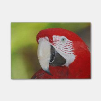 Macaw bonito del escarlata post-it nota