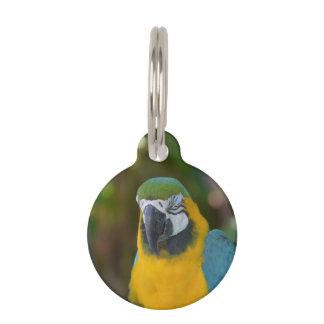 Macaw brasileño placa para mascotas