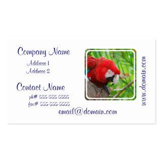 Macaw brillante del escarlata tarjetas de visita