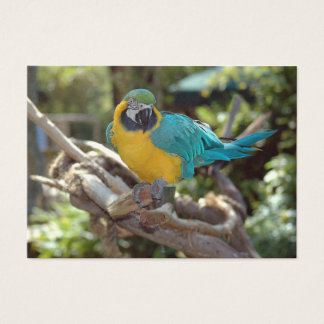 Macaw Business Card