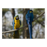 Macaw Cards