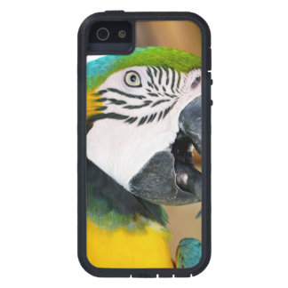Macaw Case For iPhone 5/5S