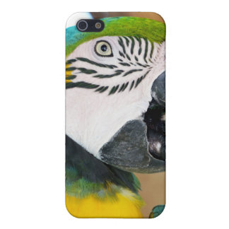 Macaw Cases For iPhone 5