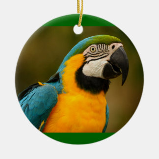 macaw ceramic ornament