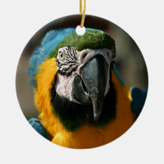 Macaw Ceramic Ornament