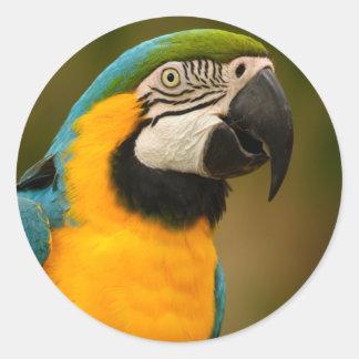 macaw classic round sticker