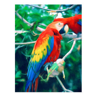 Macaw colorido postales