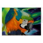 Macaw curioso tarjeta de felicitación