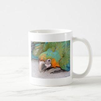 Macaw de Catalina del bebé Taza