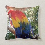 Macaw de la foto #16-Scarlet del pájaro Cojin