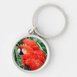 Macaw de Scalet Llavero