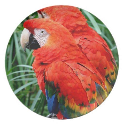 Macaw de Scalet Platos Para Fiestas