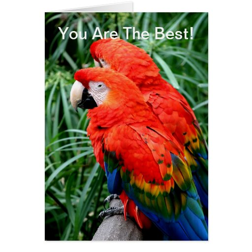 Macaw de Scalet Tarjeta De Felicitación