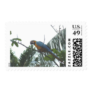 Macaw del Amazonas Sello Postal