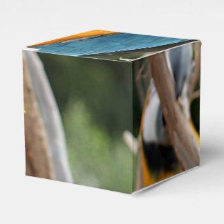 Macaw del azul y del oro caja de regalos