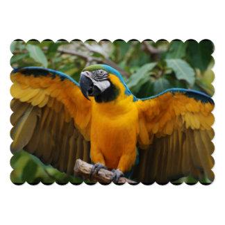 Macaw del azul y del oro con la extensión de las invitación 12,7 x 17,8 cm