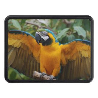 Macaw del azul y del oro con la extensión de las tapas de remolque