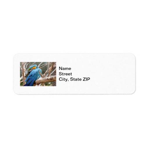 Macaw del azul y del oro etiquetas de remite
