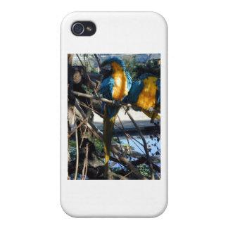 macaw del azul y del oro iPhone 4/4S funda